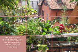 Il giardino del vicino è sempre più verde? E' PROPRIO VERO…