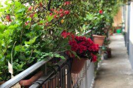 Su un balcone piccolo, 4 trucchi per realizzare un magico giardino